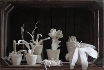 Kaori Tatebayashi - the botanist 2014