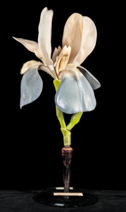 Modell einer Blüte der Schwertlilie Iris germanica 3:1 Papiermaché und Holzfuss, Osterloh Nr. 127, 1. Hälfte 19. Jahrhundert. Sonderausstellung modellSCHAU im Botanischen Museum Berlin © C. Radke, Museum für Naturkunde Berlin