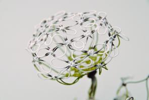 Aude Tahon: Fleur de Carotte