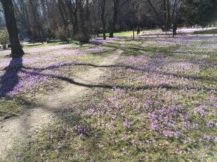 Alter botanischer Garten München 12.03.2017